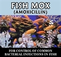 Fish Mox (Amoxicillin) 250mg / 60 Ct